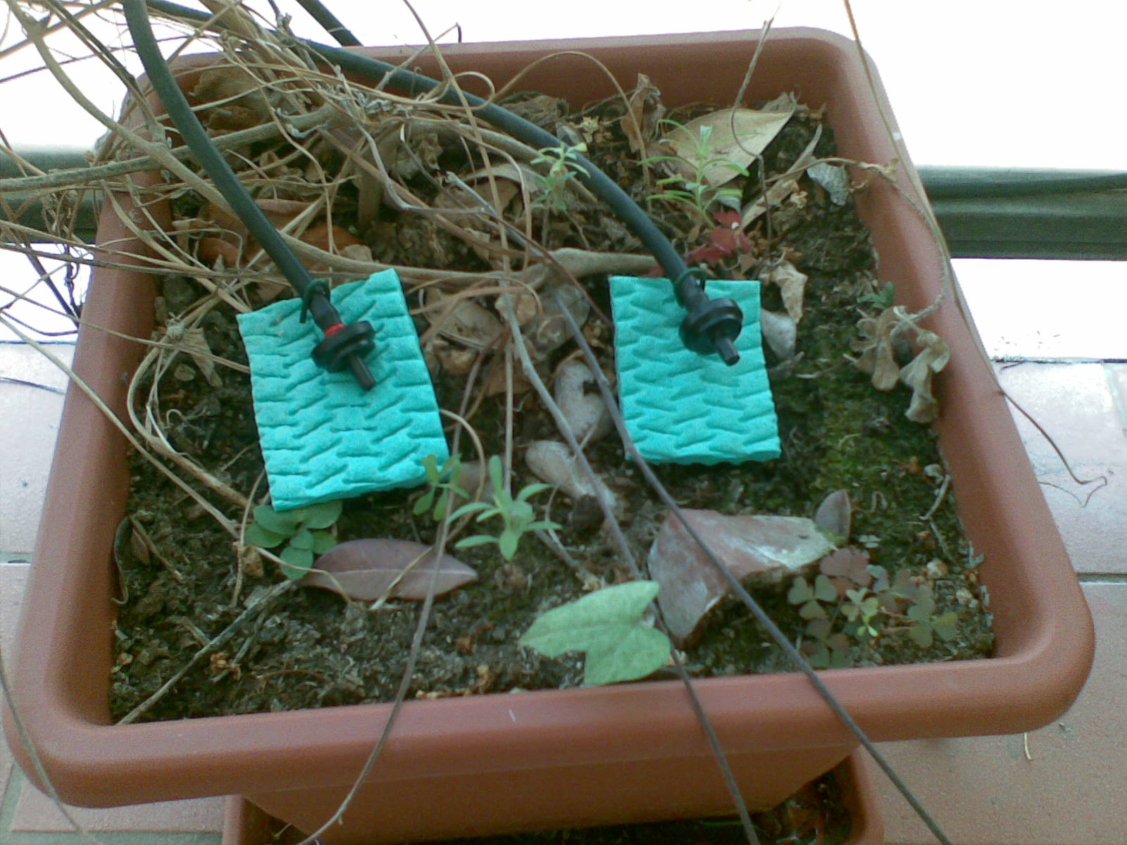 Elegant Un Esperimento Di Irrigazione Automatica: Gocciolatoi E Spugnette