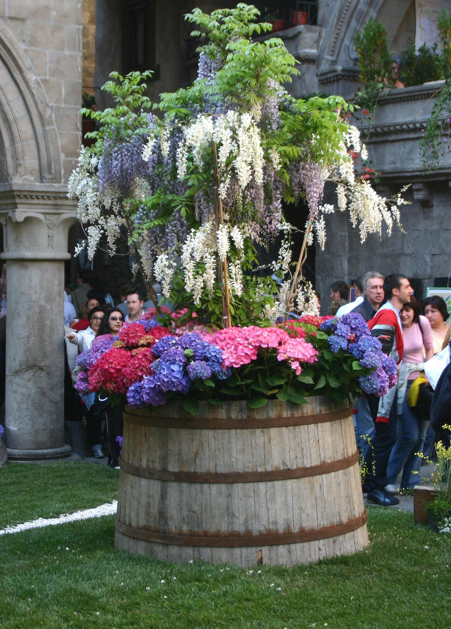 Ortensie da giardino idee per interni e mobili - Grossi fiori da giardino ...