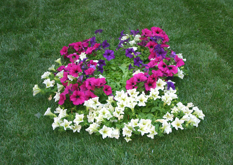 Fiori Da Giardino.Fiori Da Giardino Garden It