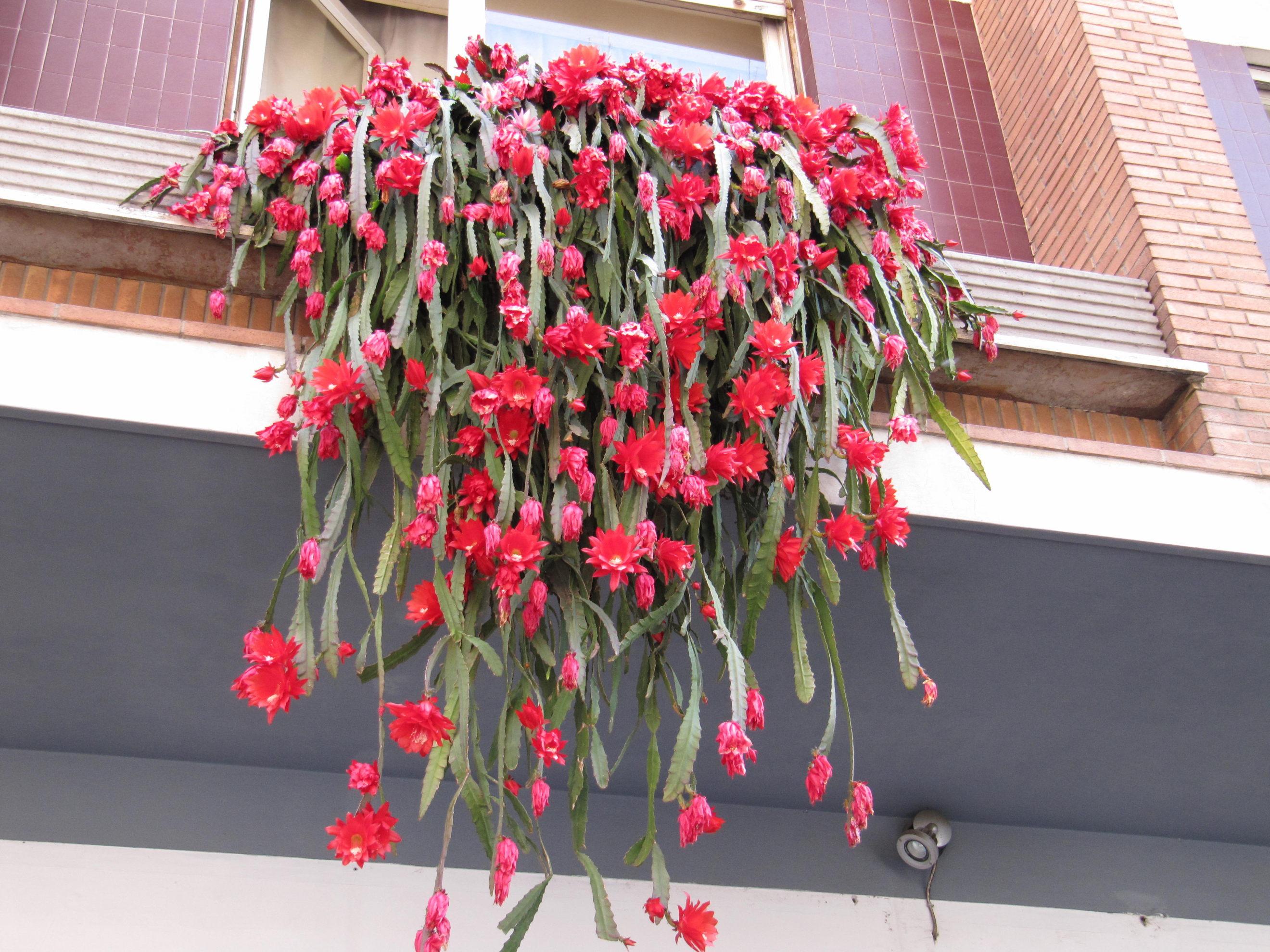 Piante Di Erba : Balconi fioriti garden